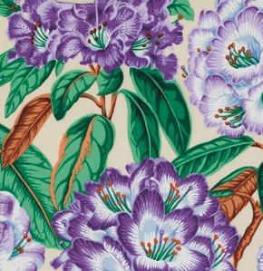 Rhodondrons in Purple