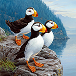 Puffin Panel 24x44