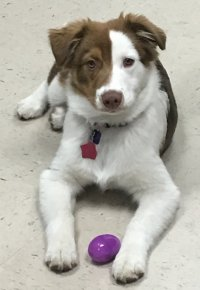 Sadie with her egg