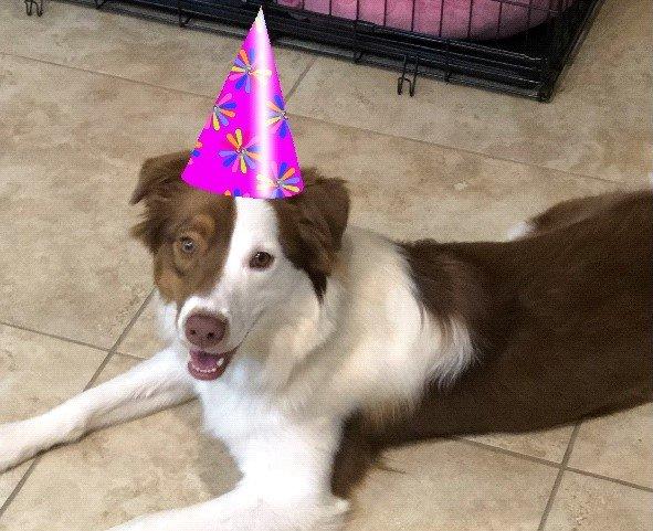 Happy Birthday Sadie!