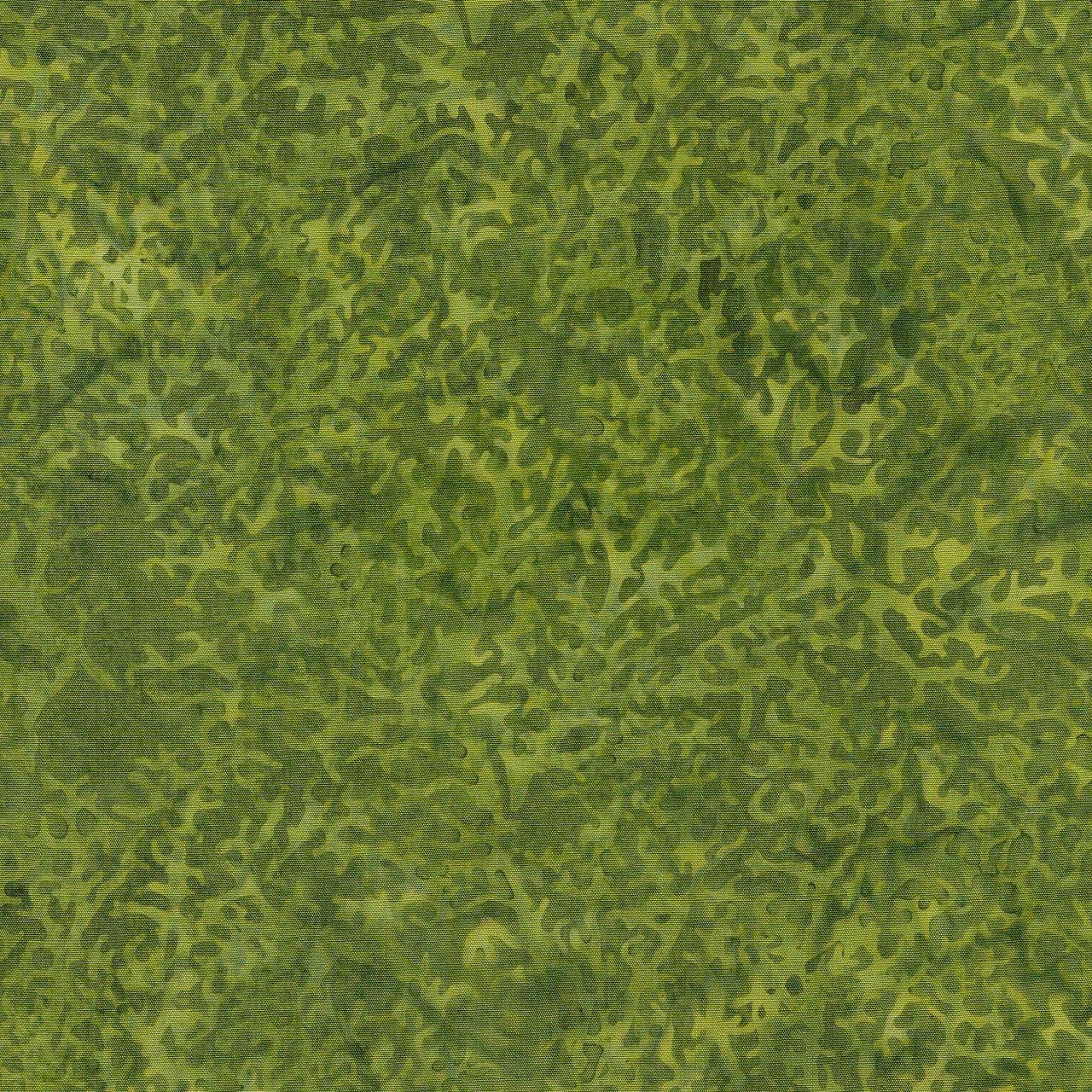 Coral - Seaweed