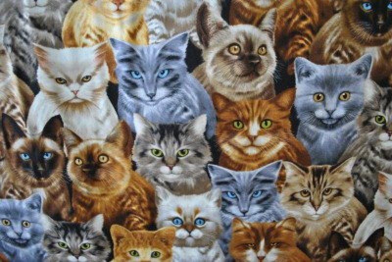 Michael's Cats