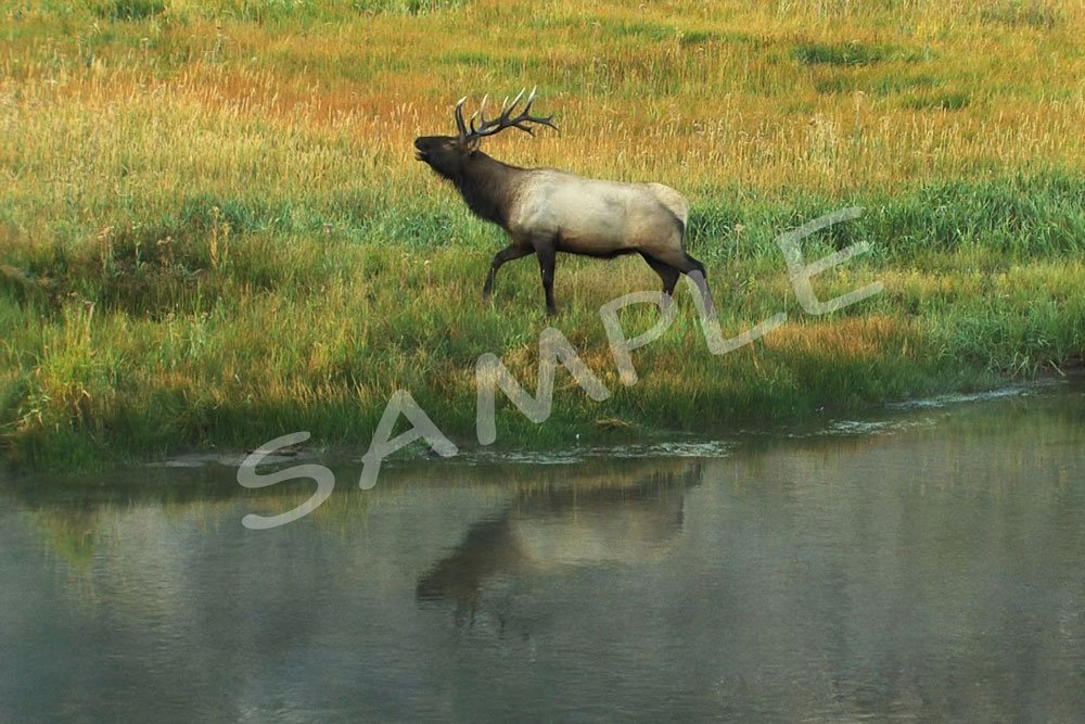 Bull Elk Reflection Fabric Block