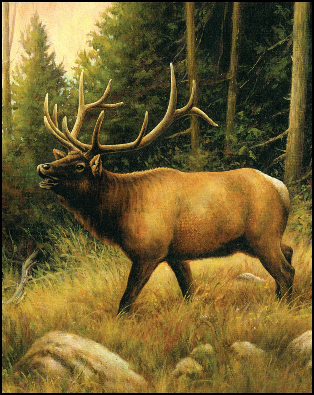 Elk - DIGITAL PANEL