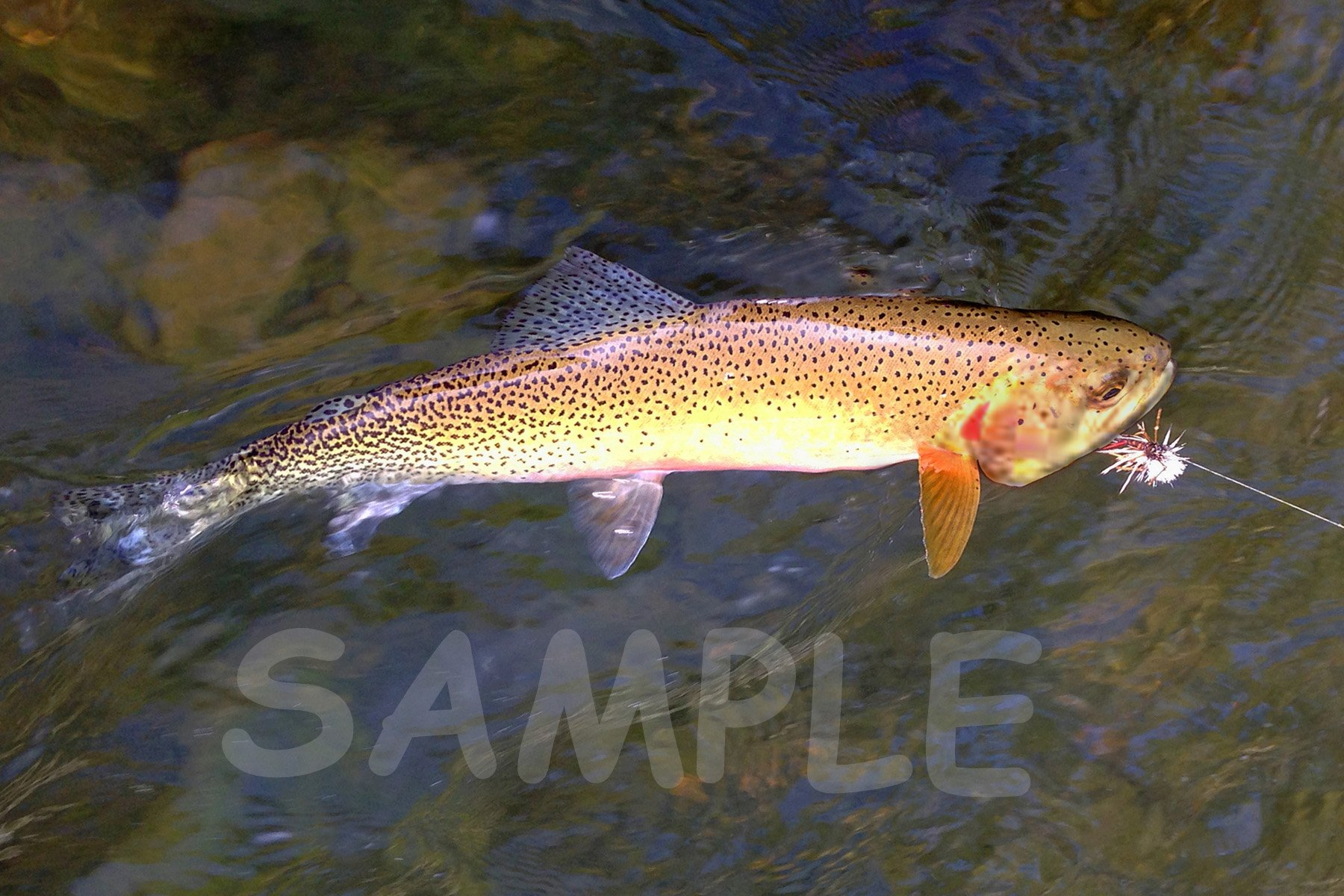 Cutthroat Trout Fabric Block