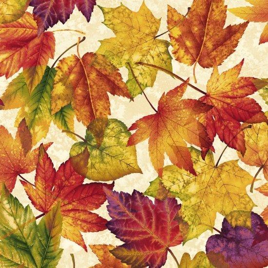 Autumn Album 2017-44