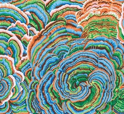 Tree Fungi - Blue