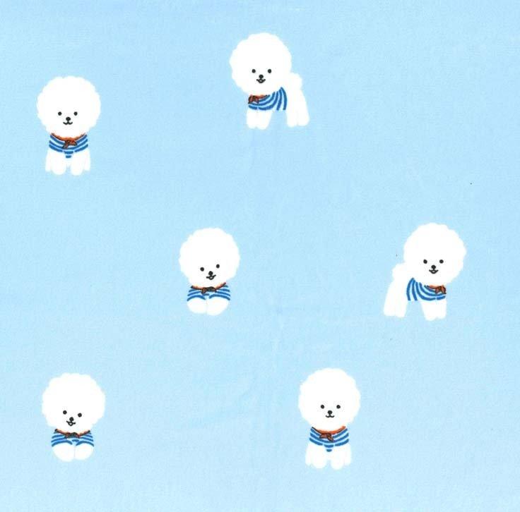 Bichon Frise Minky - Sailor