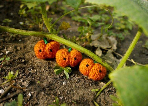 Tiny Pumpkin Kit