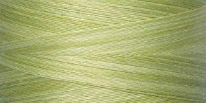 Date Palm - King Tut - 969