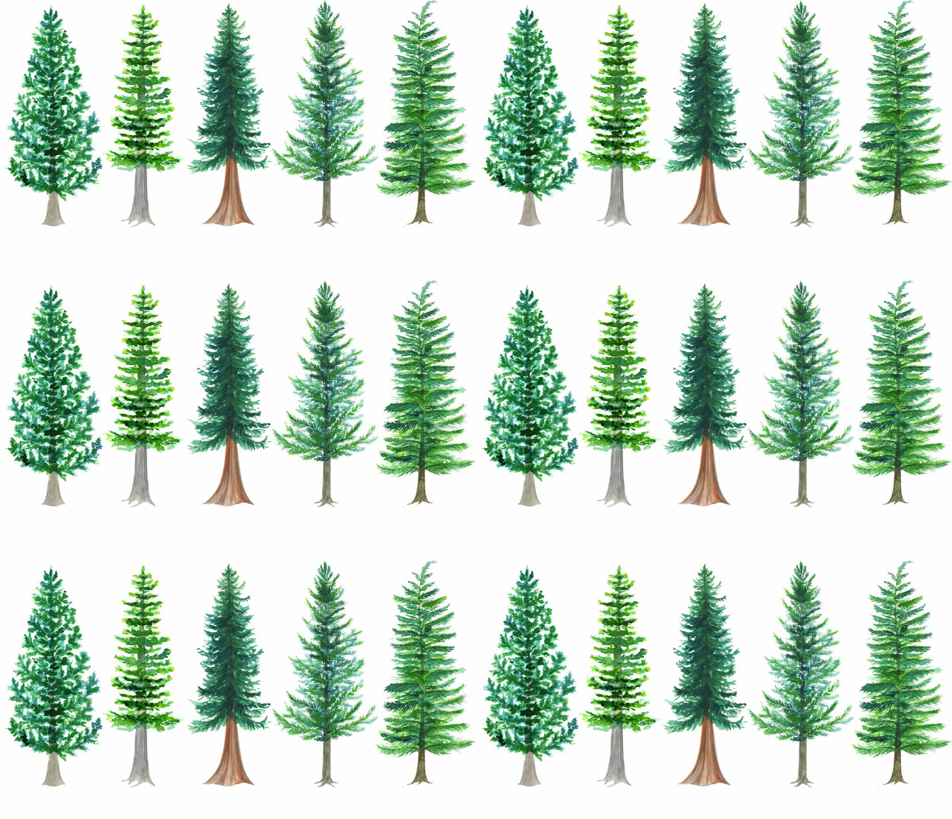 WWQSH 2021 Treepattern PRE-ORDER