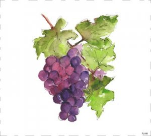purple wine grapes watercolor painting