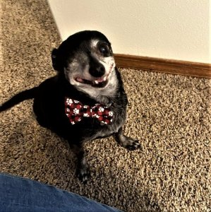 Sparrow in his new bow tie