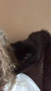Nubbington - Kitten