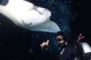 Scuba Diving with Manta Rays