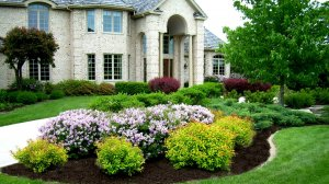 Front of house shrub garden