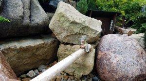 Fairies on log