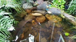 Fairy water garden