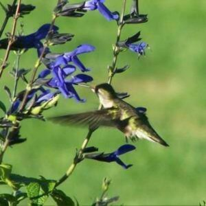 Humming bird near flower