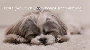Dog Sleeping with Sleep joke