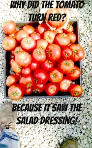 Tomatoes in a Basket with a joke