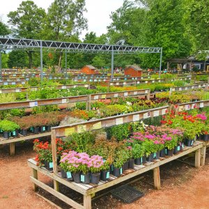Flowers on selling benches
