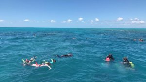 Snorkelers in water at Looe Key Reef.