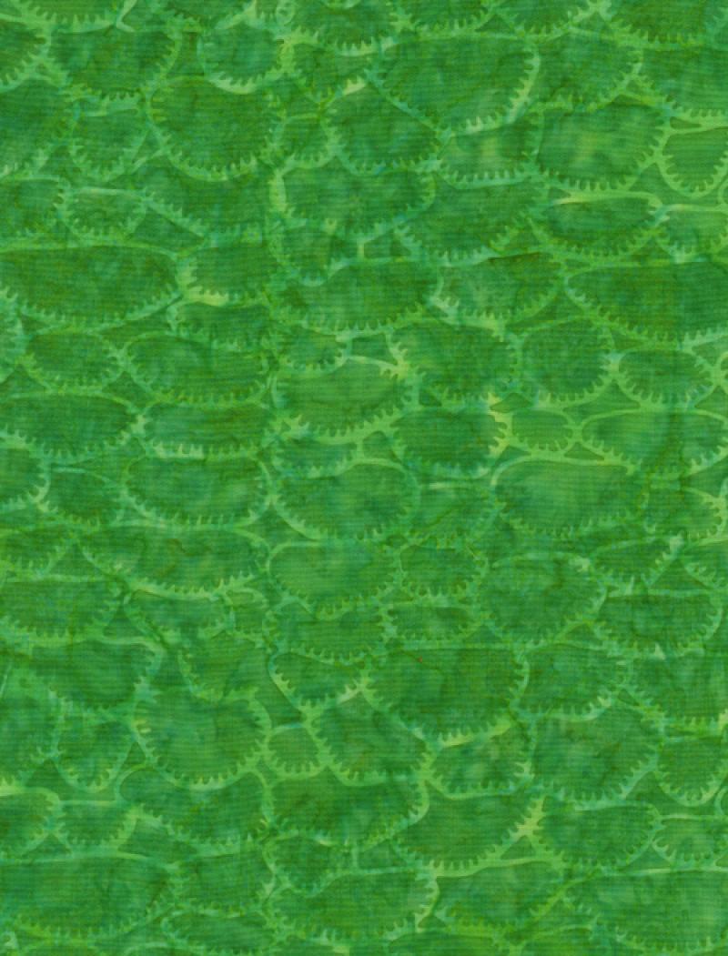 tongaconfetti-c7796-kelly