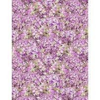 Hydrangea Dreams Packed Hydrangeas Purple
