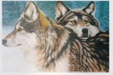 5D Wolves  f037