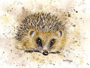 5D Hedgehog f050