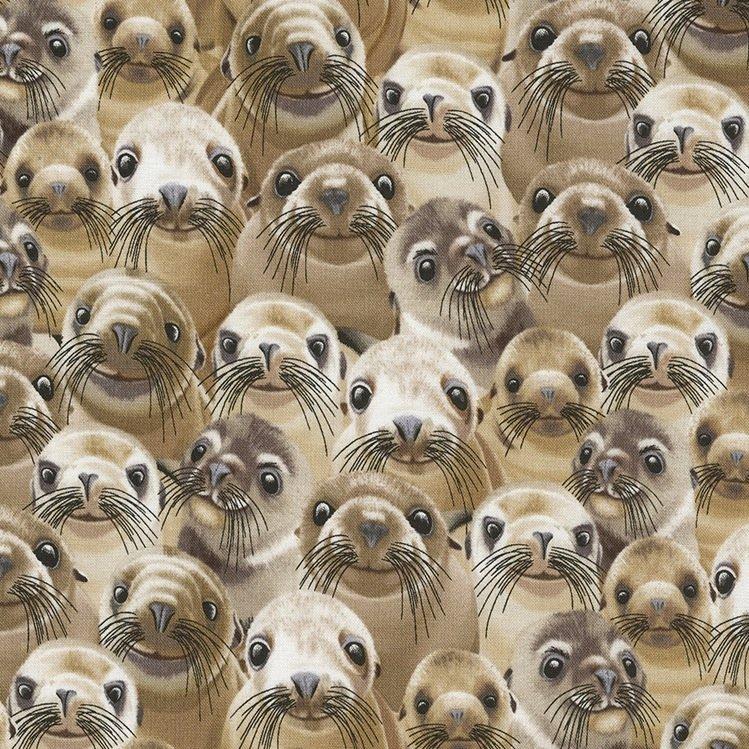 *Selfie Sea Lions -C5445