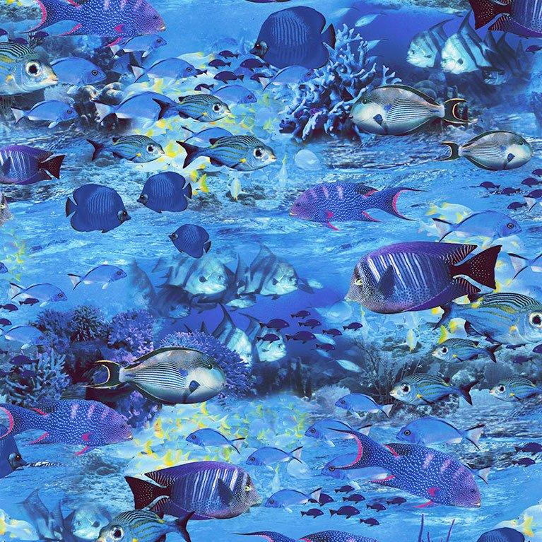 *Nautical School of Fish - C6153
