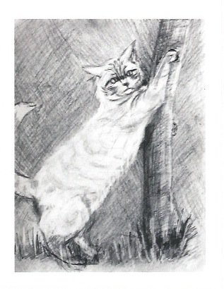 Blank Greeting Card (Cat Scratching)