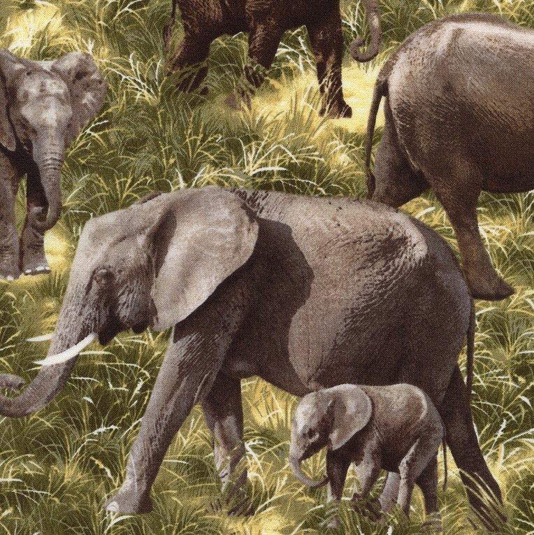 *Elephants - C1584