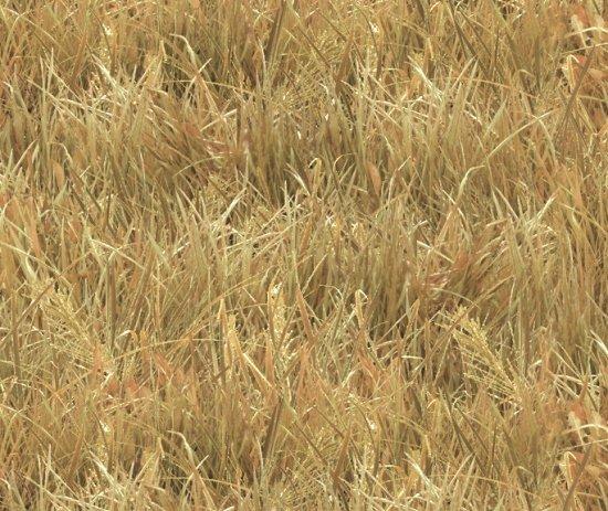 wheat field 250-wheat