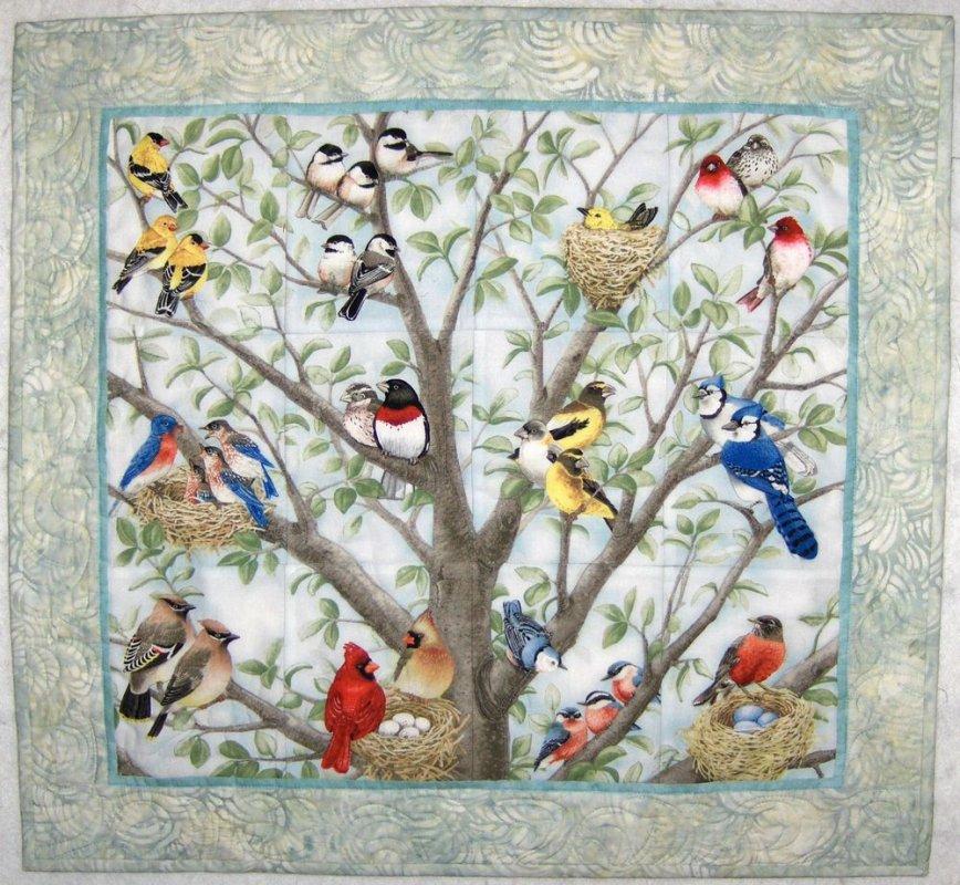 Kit-Beautiful Birds
