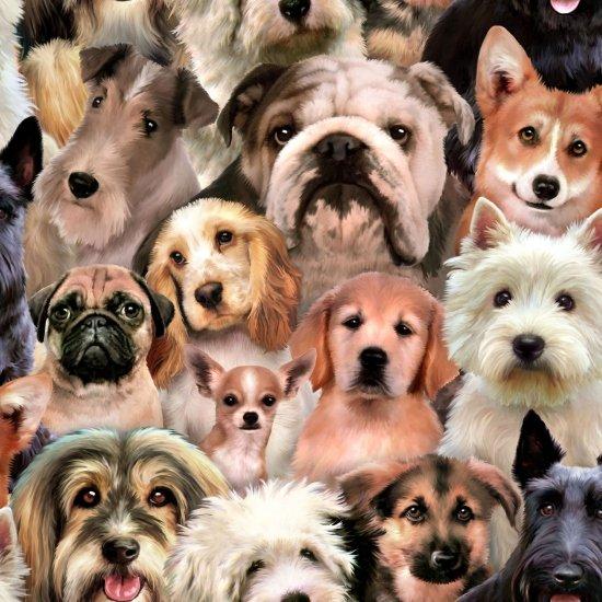 Dogs 1255 Multi