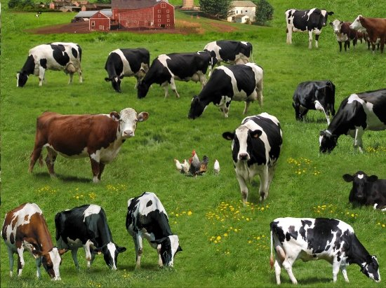 Cow Fabric Farm Animals 337 Green