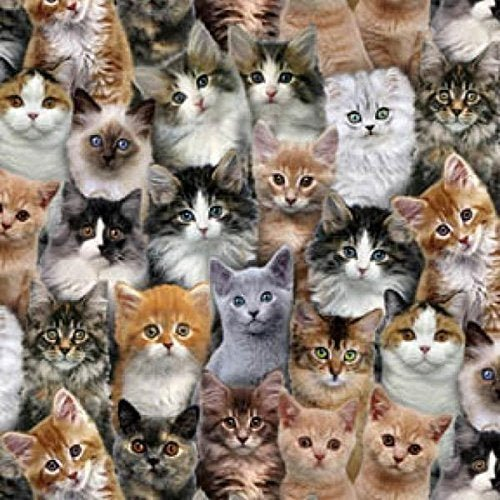 Adorable Pets Packed Cats 3802 Multi