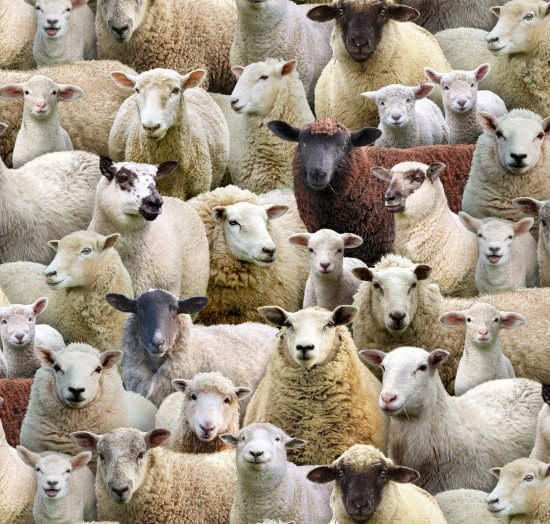 Sheep 600 Multi