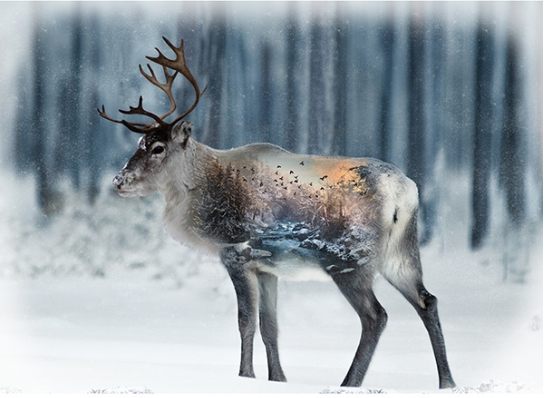 Call of the Wild Caribou Panel 33 December