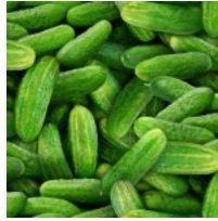 Cucumbers Green 437