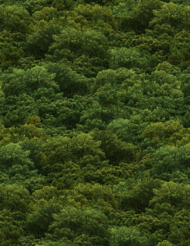 Farmstead Trees Green
