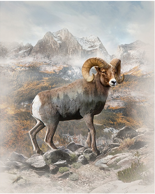 Hoffman Call of the Wild - Long Horn Sheep