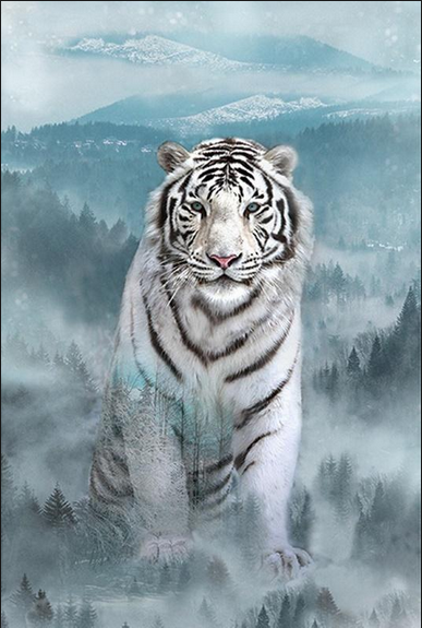 Hoffman Call of the Wild White Tiger
