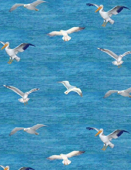 Gulls & Pelicans