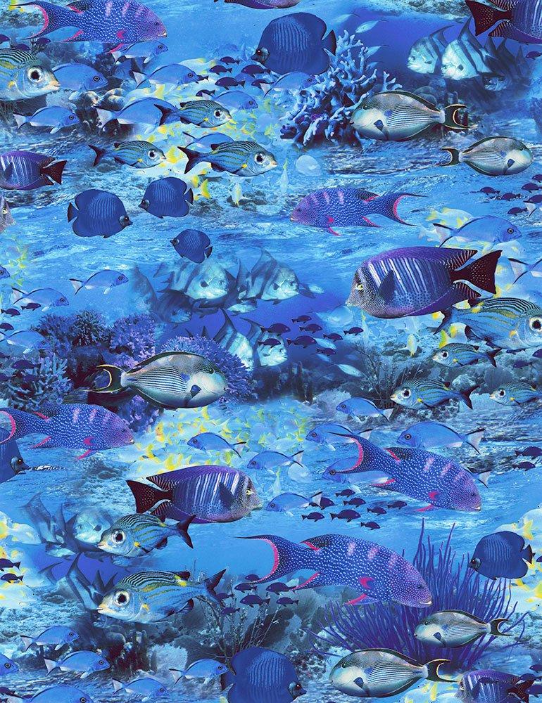 School of Fish