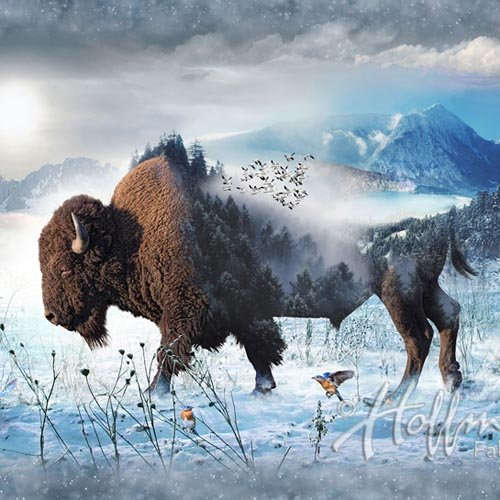 Call of the Wild Digital Print by Hoffman - Bison
