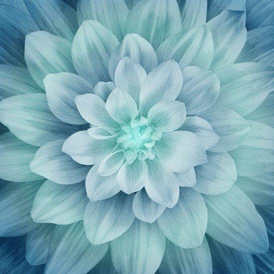 Dream Big - Turquoise